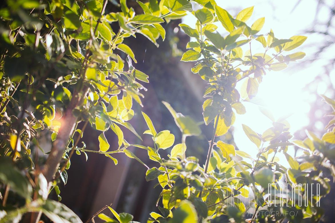 Fotos Fotografos Boda Huerto del Cura Elche 3
