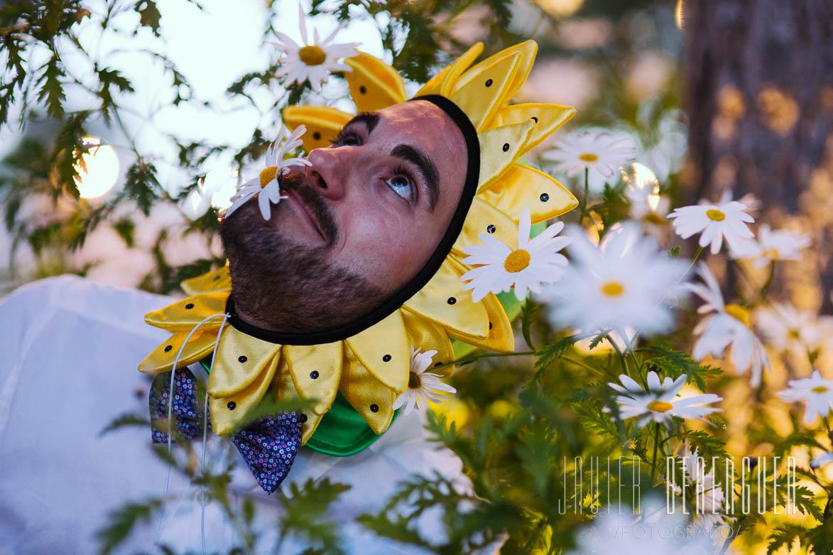 Campos en Flor Fotos de Margaritas
